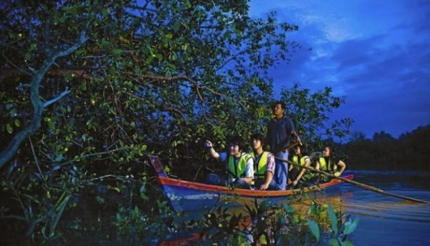 Drive down from Kuala Lumpur to the world's largest firefly colony in Kuala Selangor